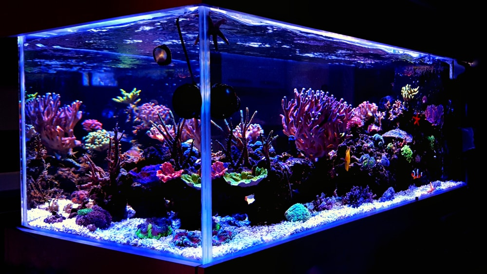 Hours of calm enjoyment can be had watching a reef aquarium.