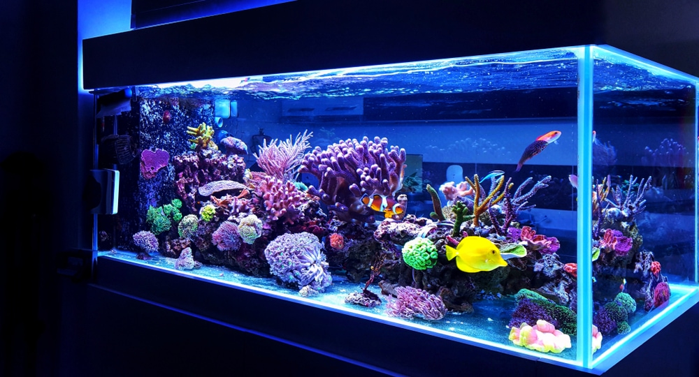 A Relaxing and beautiful coral reef aquarium