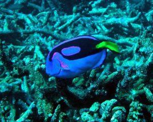blu-tang