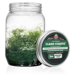 Algaebarn Clean Chaeto - Chaetomorpha Macroalgae