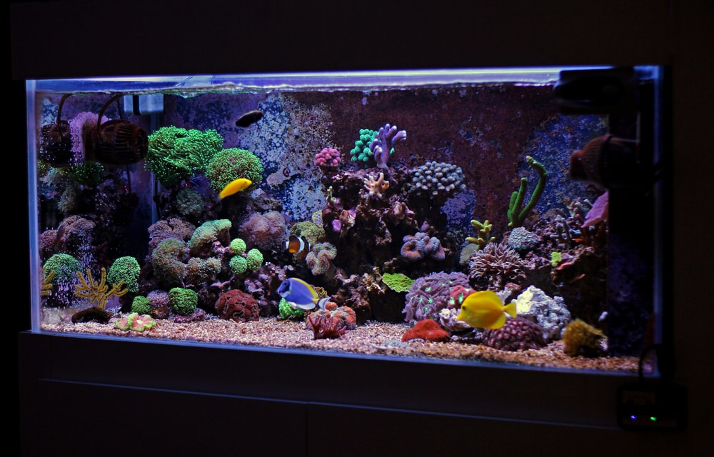 A mature reef aquarium surely has thousands upon thousands of copepods!