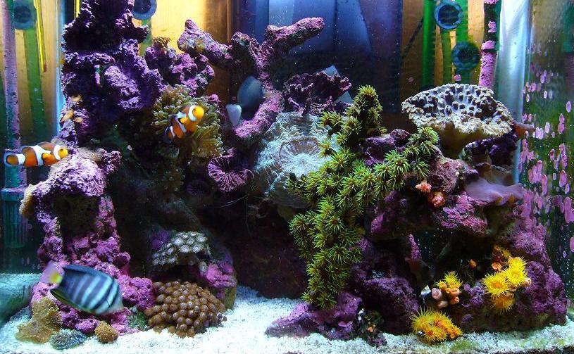 Most often, a beautiful marine aquarium has a strong refugium!