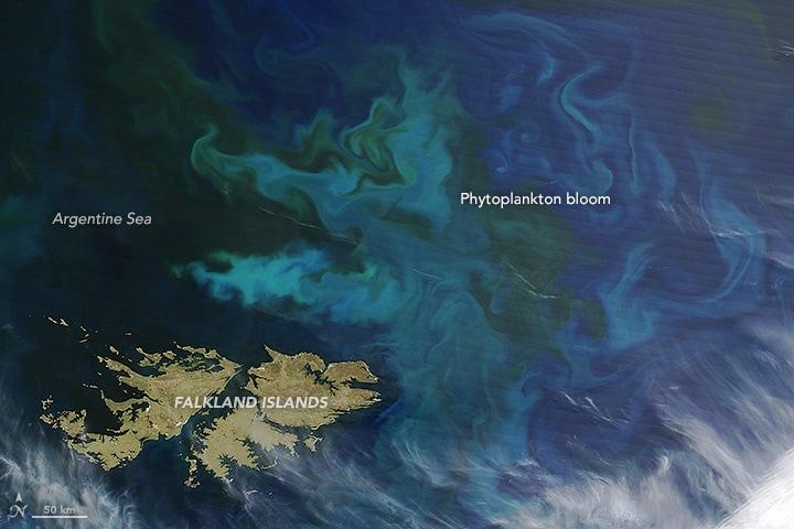 A Falkland Island Phytoplankton Bloom