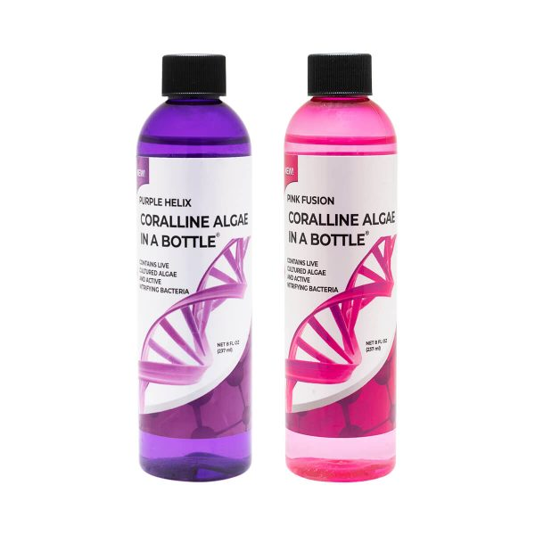 Coralline Algae in a Bottle, In Pink or Purple!