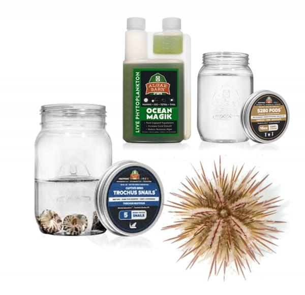 Hair Algae Killer Kit by AlgaeBarn