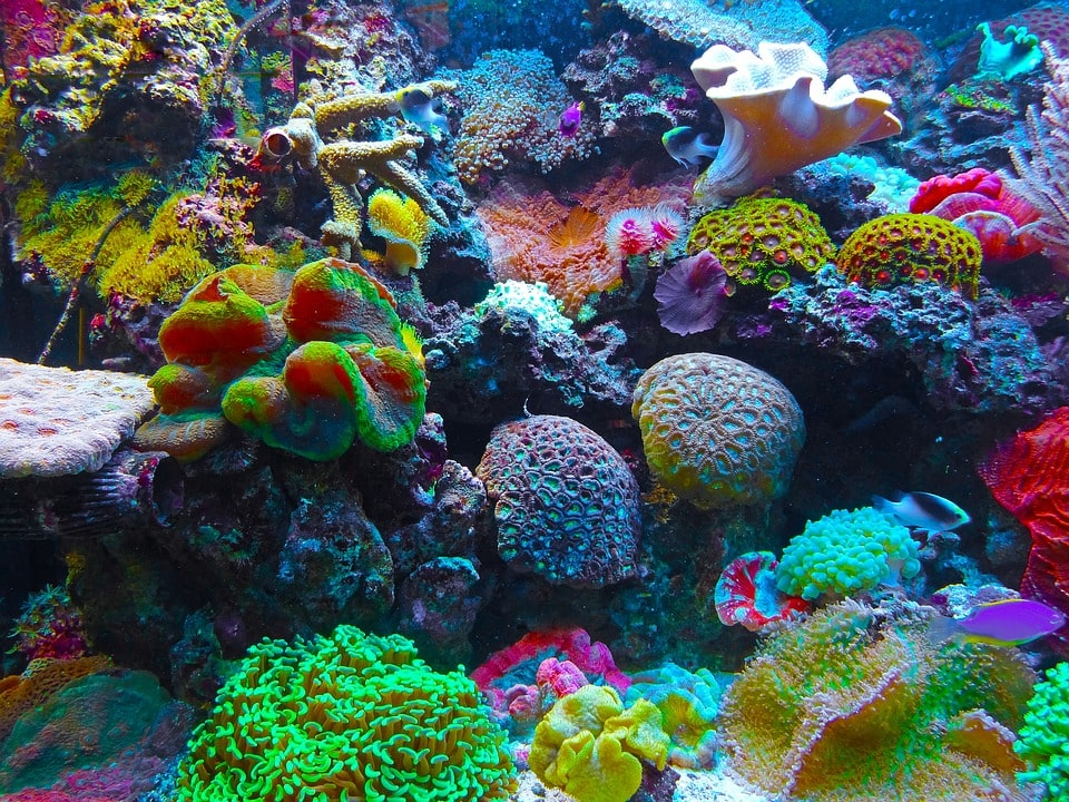 A beautiful Mixed coral Reef