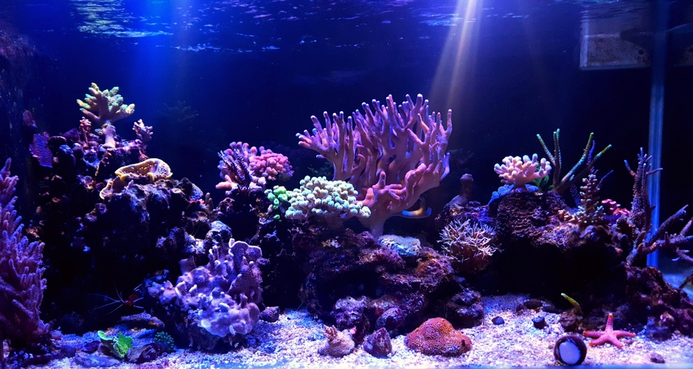 A beautifully Maintained Aquarium