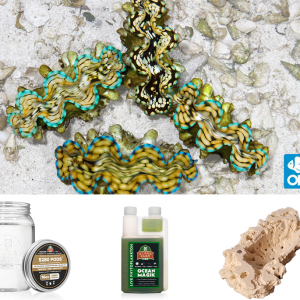 Squamosa Clam Keeper Kit