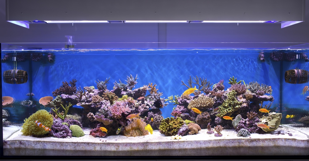 A beautiful marine Aquarium