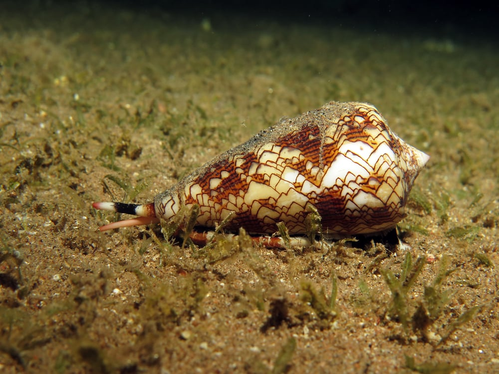a snail cleaning detritus on the sea floor