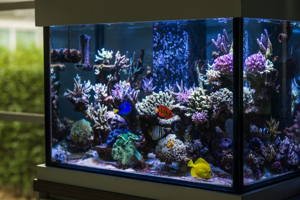 Beautiful Marine Aquariums are only limited by the imagination!