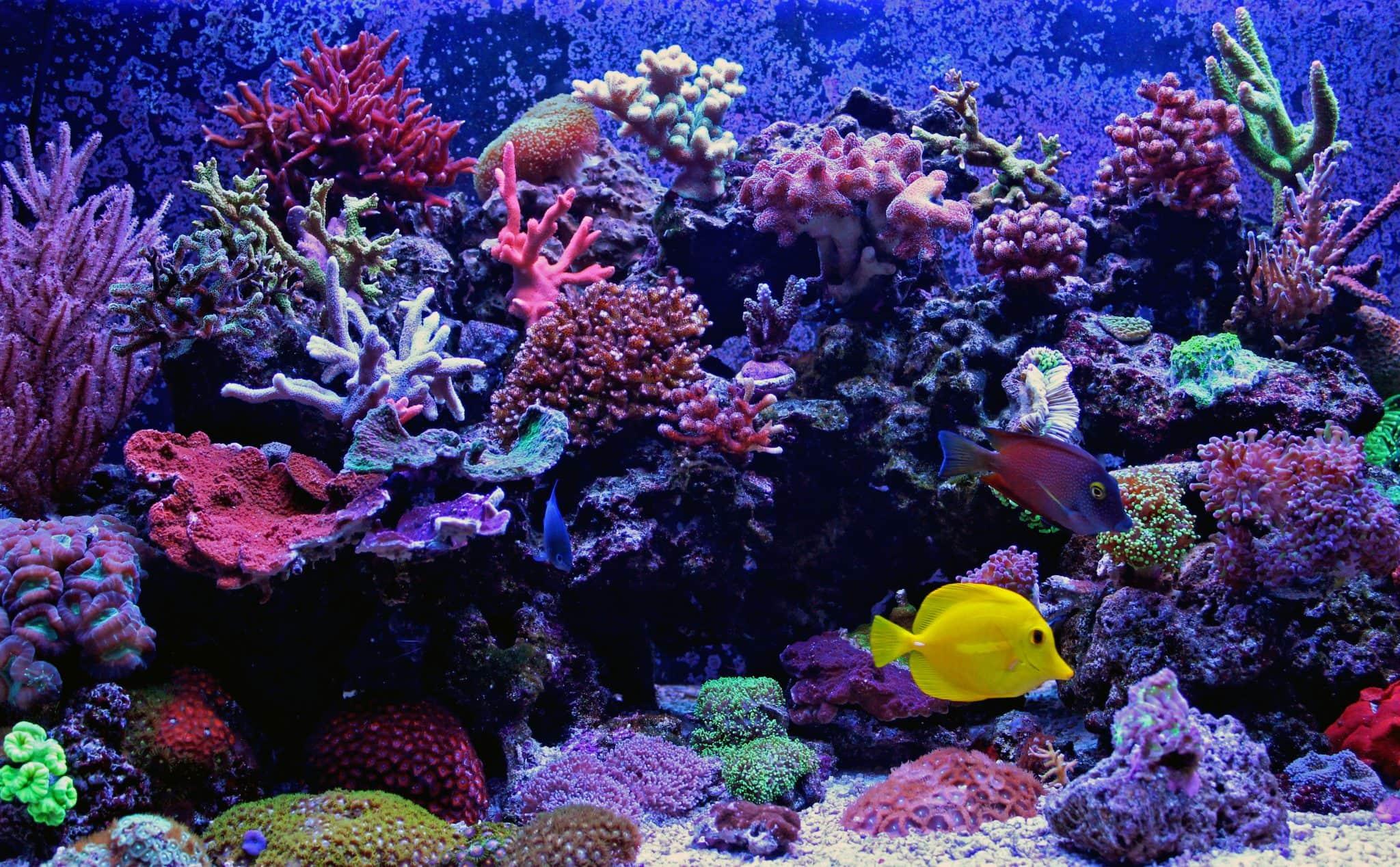 Unique Marine Aquariums Aquarium Design The Algae Lab Algaebarn