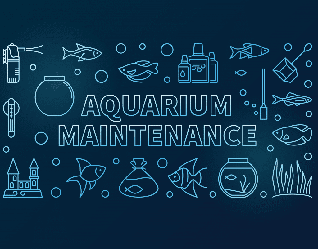 Aquarium Maintenance Help!
