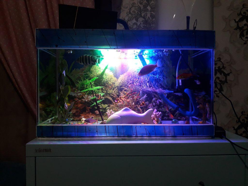 Aquarium night lights that are too bright!
