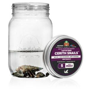 AlgaeBarn Cerith Snails for Sale