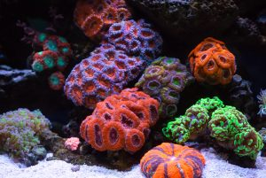 Beautiful Coral Reef Ecosystems require delicate nitrate and phosphate balances.