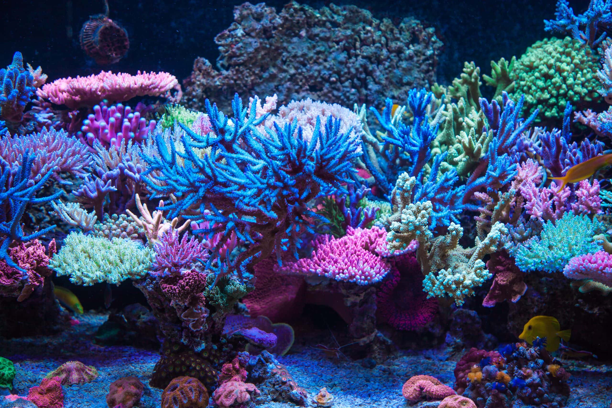Aquariums like this are very tuned for Coral Growth