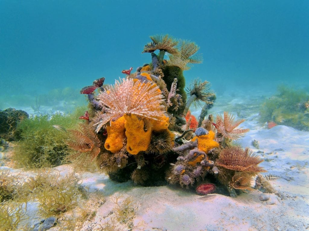 A beautiful colony of sponges and feather dusters and worms.