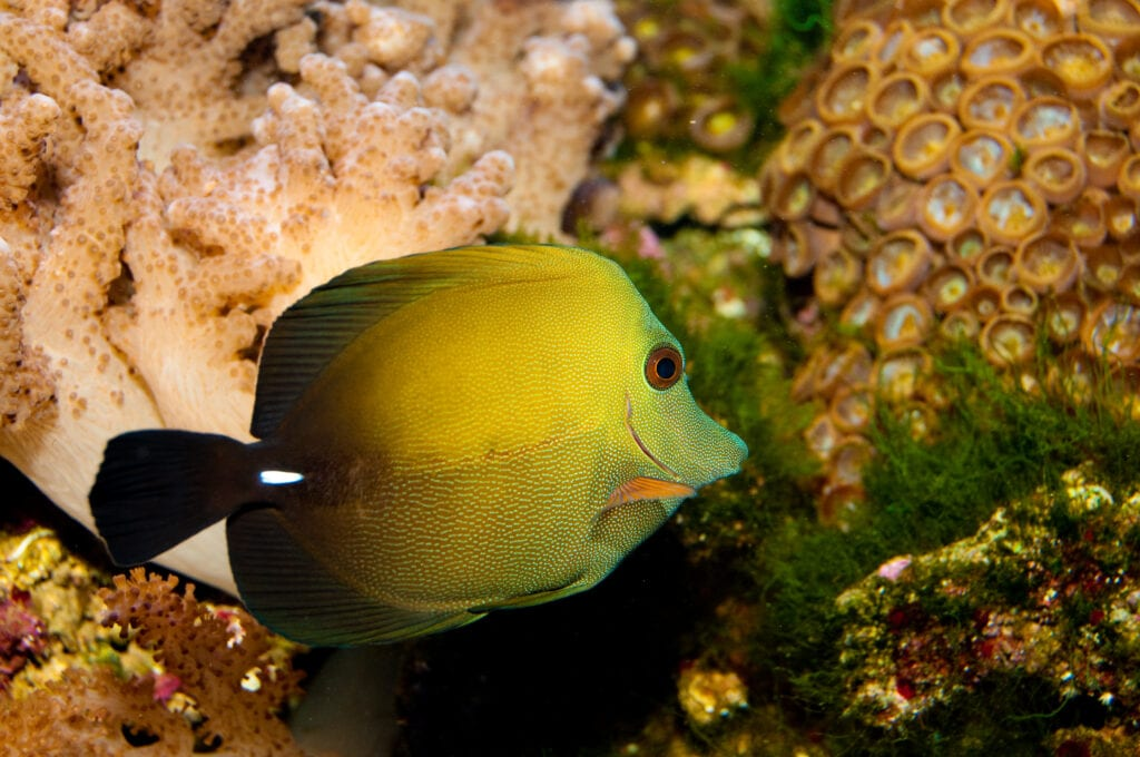 a Beautiful Scopas Tang