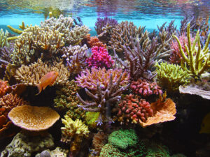 Sps Corals are often extremely expensive!