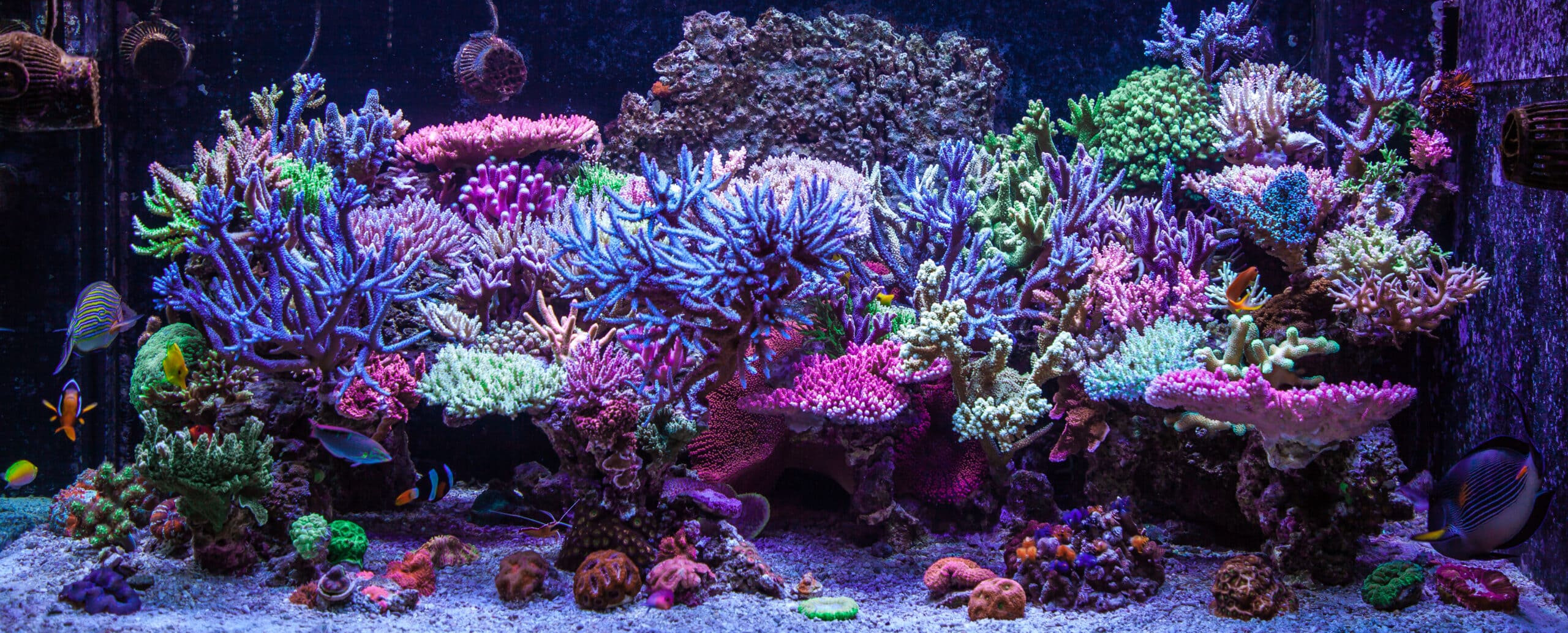 A beautiful Home Reef Aquarium