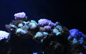 A Coral reef, growing on an aquascape