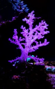 A natural Reef will allow even more rare corals to thrive!