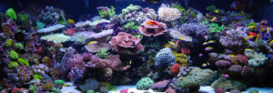 Having a marine ecosystem like this takes prudence and patience!