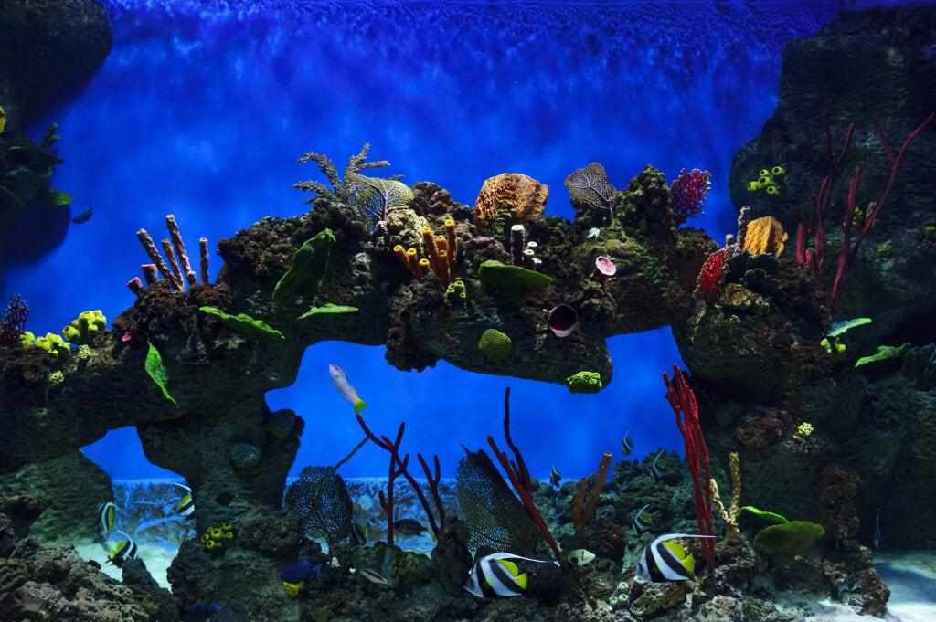 You can create an intricate aquascape